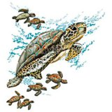 Green Sea Turtle Swimming with Babies T-Shirt (Adult)