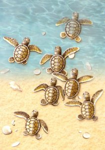 Baby Turtles Blank Greeting Card