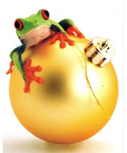 """Hopping Good Time"" Frog Christmas Cards, bx/18"