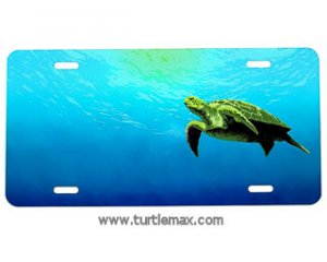 Sea Turtle on License Plate