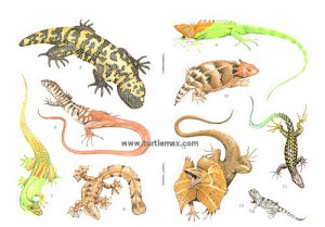 18 Full-Color Lizard Stickers