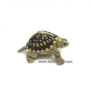"""Dom"" Mini Porcelain Box Turtle"