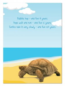 Taking it Easy Turtle Birthday Card